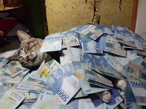 有钱能治愈一切矫情
